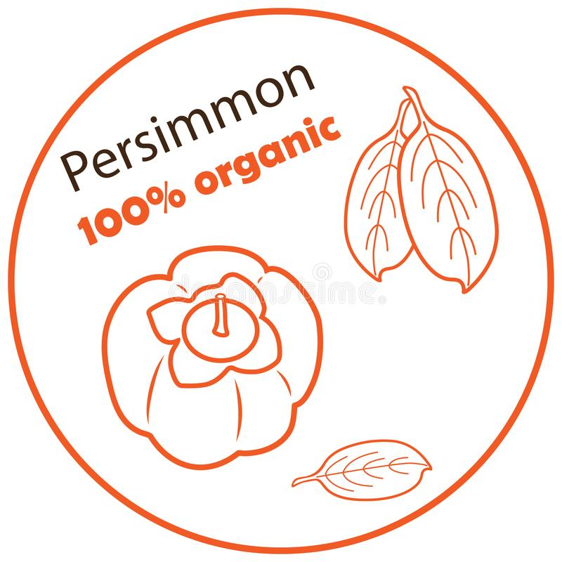 Persimmon with leaves vector illustration on white background royalty free illustration