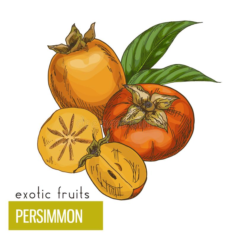 Persimmon, slice, fruits and leaves. royalty free illustration