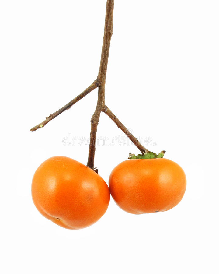 Download Persimmons stock image. Image of branch, isolated, fall - 11690507