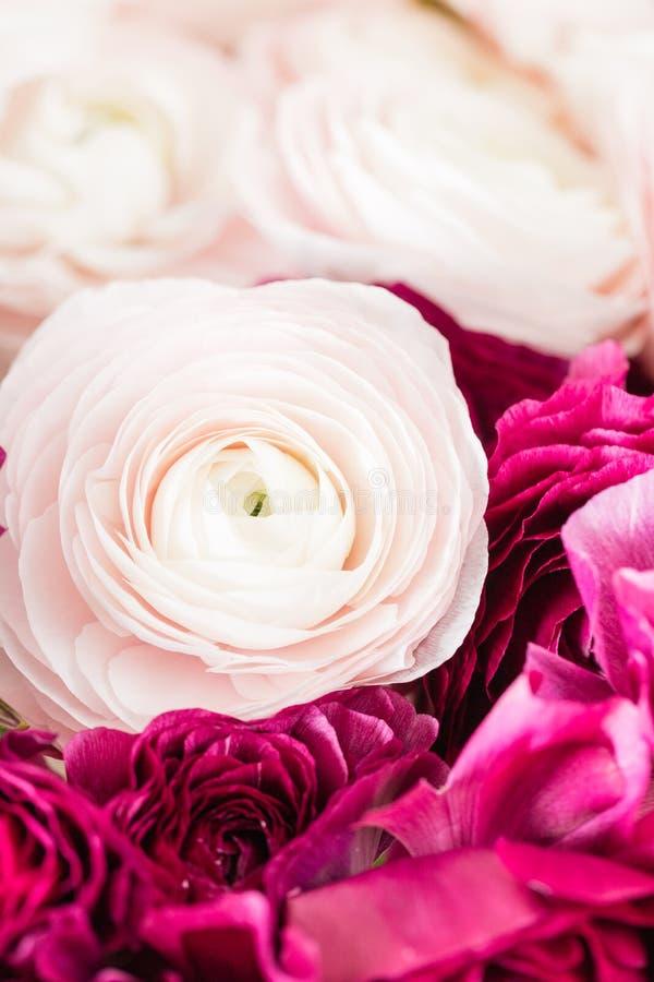 Persische Butterblume Bündeln Sie buntes und blasses - heller Hintergrund der rosa Ranunculusblumen Glasvase auf der rosa Weinles lizenzfreie stockfotografie