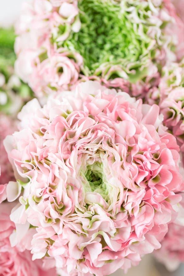 Persische Butterblume Spitze mit vielen Blumenblättern Bündel blaß - rosa Ranunculus blüht hellen Hintergrund tapete stockbild