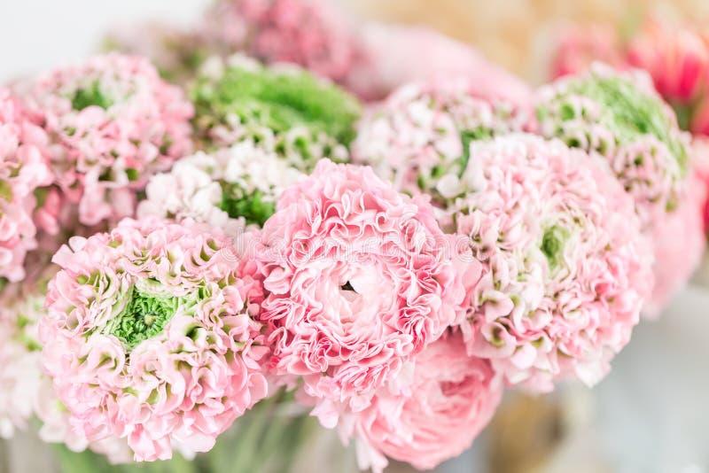 Persische Butterblume Spitze mit vielen Blumenblättern Bündel blaß - rosa Ranunculus blüht hellen Hintergrund tapete lizenzfreie stockfotos