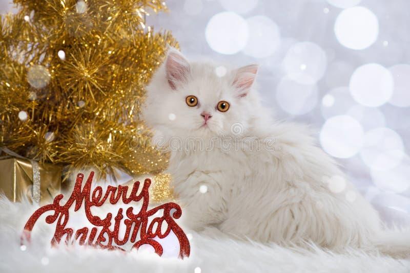 Persische Kätzchen wirh Weihnachtsdekoration stockbilder