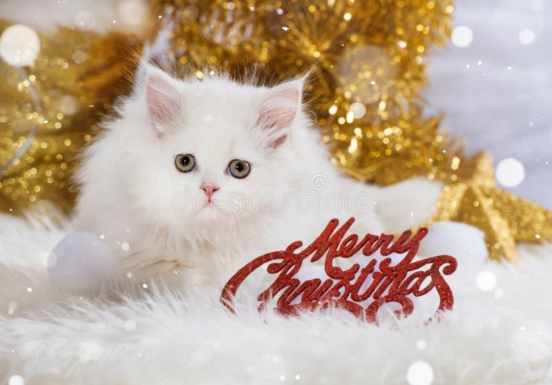 Persische Kätzchen wirh Weihnachtsdekoration lizenzfreie stockfotografie