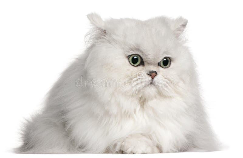 Persische Katze, 2 Jahre alt stockfoto