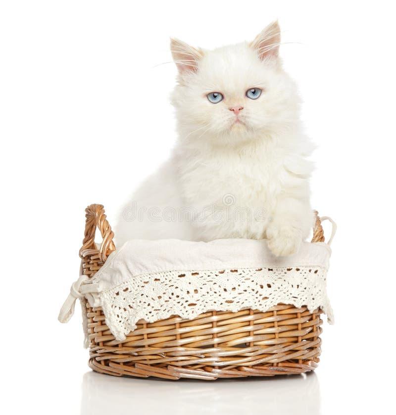 Persische Katze im Weidenkorb lizenzfreie stockfotografie