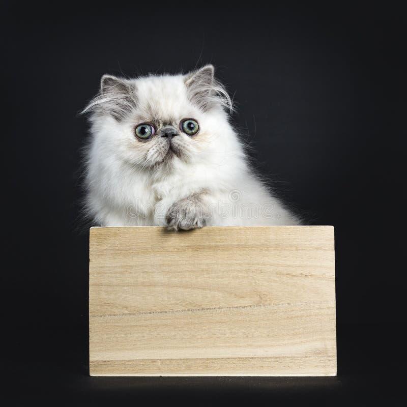 Persisches Kätzchen, das in der Holzkiste sitzt lizenzfreie stockfotografie