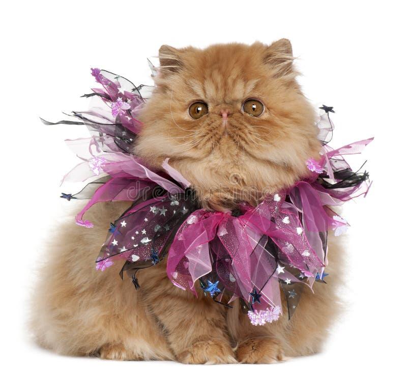 Persisches Kätzchen, das rosafarbene Farbbänder trägt lizenzfreie stockfotografie