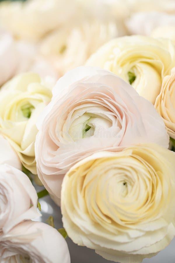 Persisk buttercup Blek grupp - rosa och pastellfärgade gula ranunculusblommor i exponeringsglasvas Vertikal tapet fotografering för bildbyråer