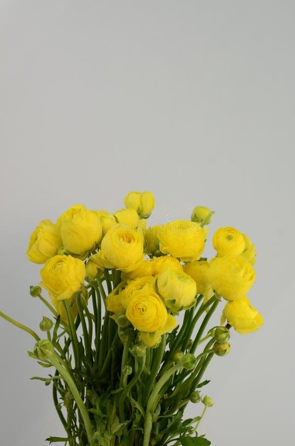 Persisk buttercup Gruppgräns - den gula ranunculusen blommar ljus bakgrund arkivbild