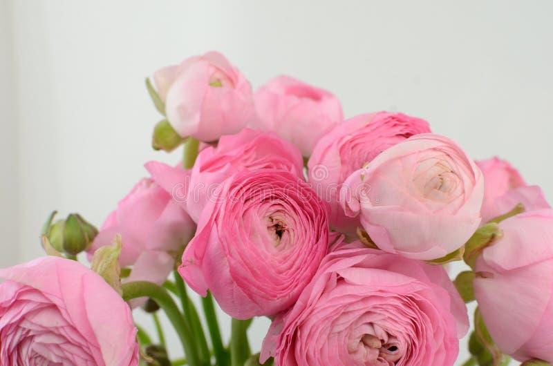Persisk buttercup Gruppgräns - den rosa ranunculusen blommar ljus bakgrund arkivfoton