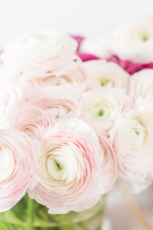 Persisk buttercup Gruppgräns - den rosa ranunculusen blommar ljus bakgrund Glass vas på trätabellen för rosa tappning royaltyfria bilder