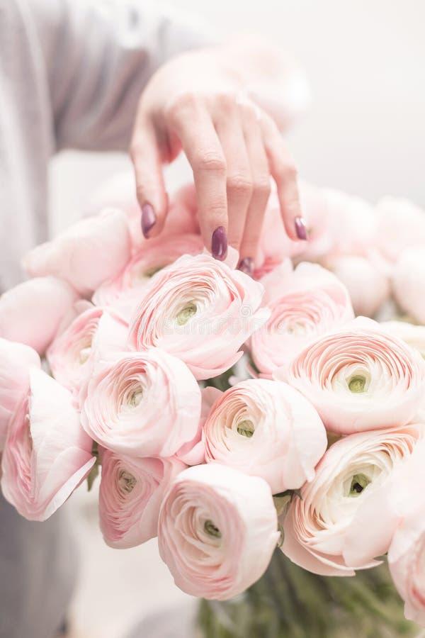Persisk buttercup Gruppgräns - den rosa ranunculusen blommar ljus bakgrund tapet vertikalt foto royaltyfri foto