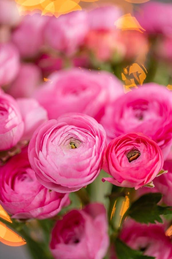 Persisk buttercup Karmosinröda rosa ranunculusblommor för grupp i exponeringsglasvas Girlandbokeh på bakgrund Vertikal tapet royaltyfri bild