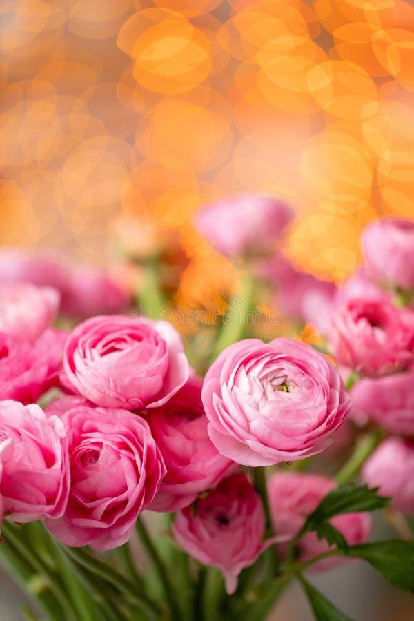 Persisk buttercup Karmosinröda rosa ranunculusblommor för grupp i exponeringsglasvas Girlandbokeh på bakgrund Vertikal tapet arkivfoto