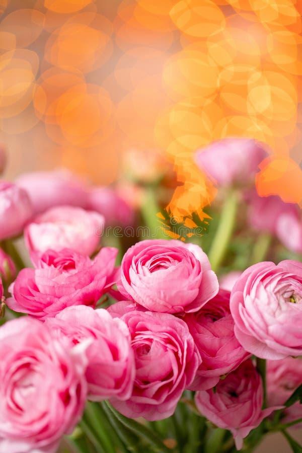 Persisk buttercup Karmosinröda rosa ranunculusblommor för grupp i exponeringsglasvas Girlandbokeh på bakgrund Vertikal tapet fotografering för bildbyråer