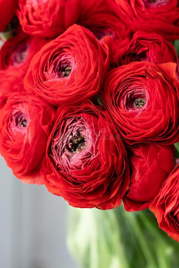 Persisk buttercup Röda ranunculusblommor för grupp i exponeringsglasvas 0 tillgängliga eps blom- versionwallpaper för 8 Textur av royaltyfri foto
