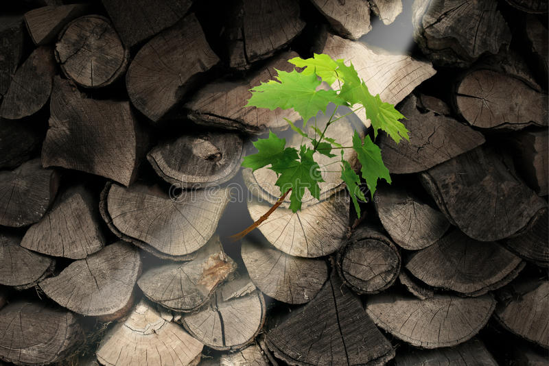 Download Persistence And Determination Stock Photography - Image: 32853112