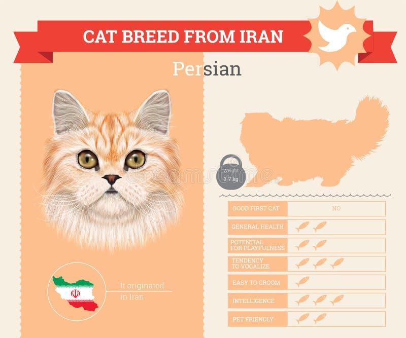 Perskiego kota trakenu infographics royalty ilustracja