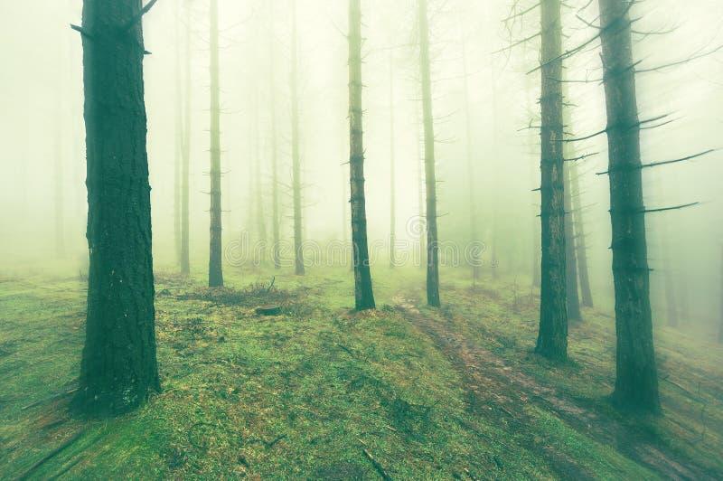 Perso nella foresta fotografia stock