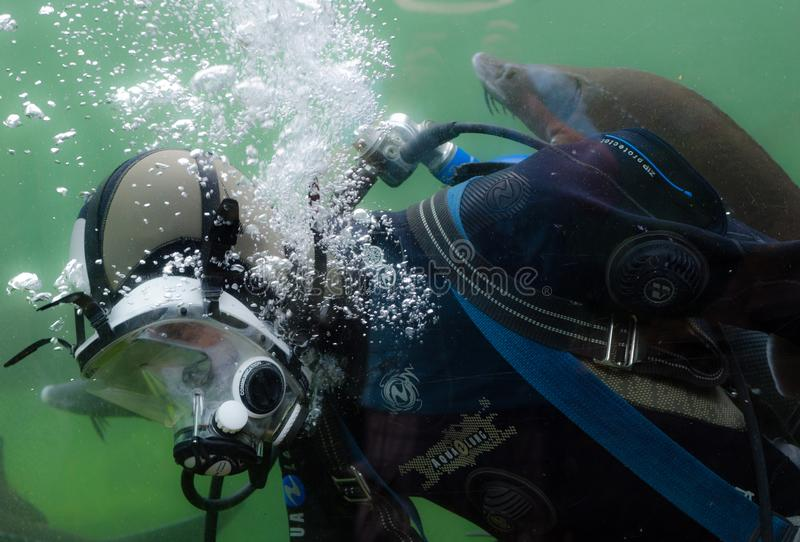 Person in Black and Blue Wetsuit Doing Scuba Diving stock images