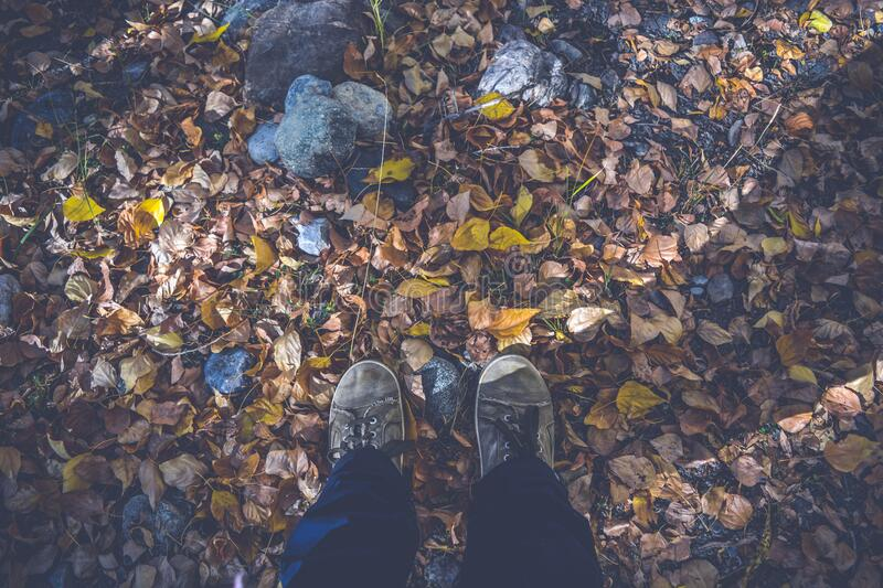 Person in Black Pants and Gray Low Top Shoes Stand on Dried Leaves and Rocks during Daytime royalty free stock images