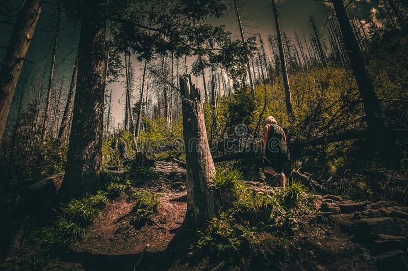 Person in Black Top Walking Through Forest royalty free stock images