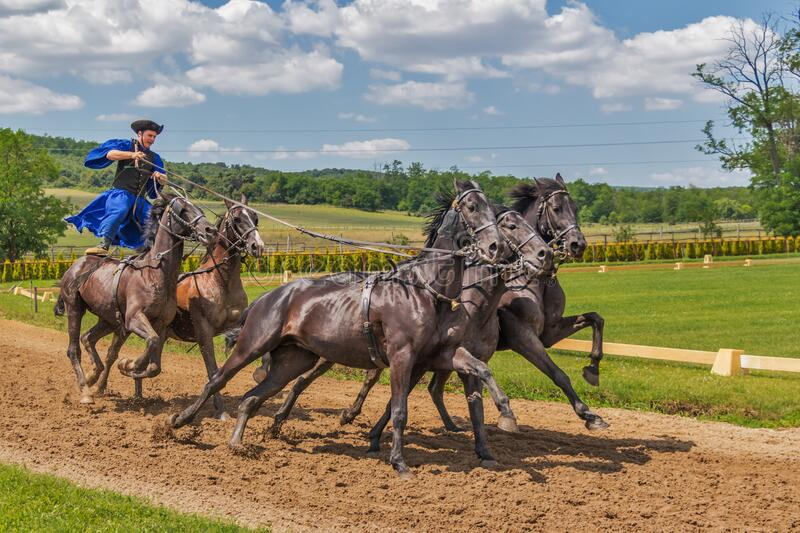 Person in Blue Dress Standing on 2 Horse Following 3 Horse during Daytime royalty free stock photography