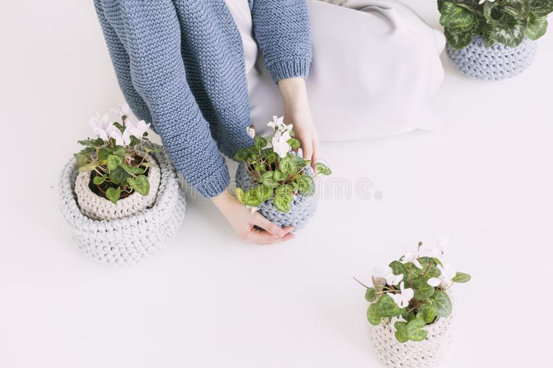 Person in Blue Sweater Holding Green Potted Plant royalty free stock photography