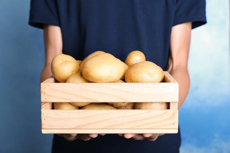 Person, die hölzerne Kiste mit frischen organischen Kartoffeln hält stockfoto