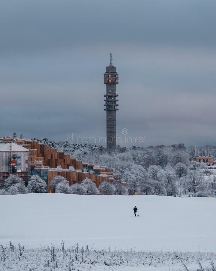Person, die mit Hund an einem Wintertag auf einem Feld in Stockholm Schweden geht lizenzfreies stockfoto