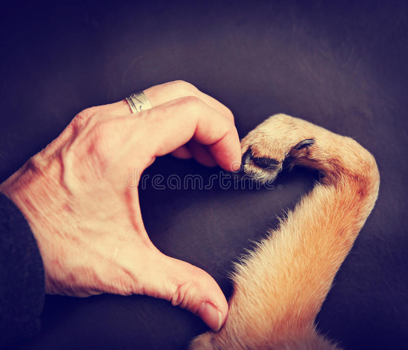 Person and a dog making a heart shape with the hand and paw to. A person and a dog making a heart shape with the hand and paw toned with a retro vintage royalty free stock photos