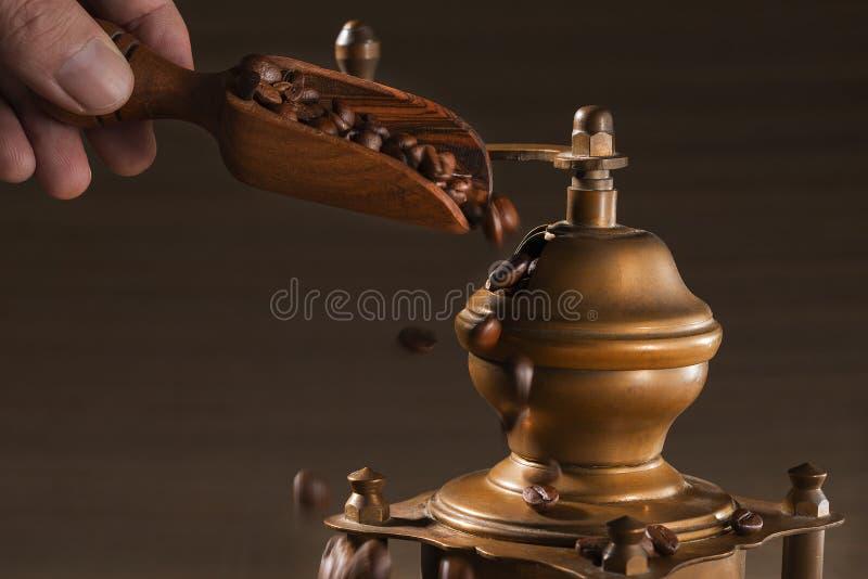 Person füllt eine Schaufel von den Kaffeebohnen eines Baums, in der Kaffeemühle stockfoto