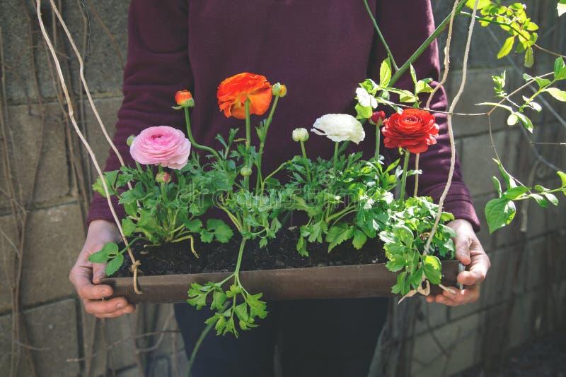 Person hält Blumentopf lizenzfreie stockfotos