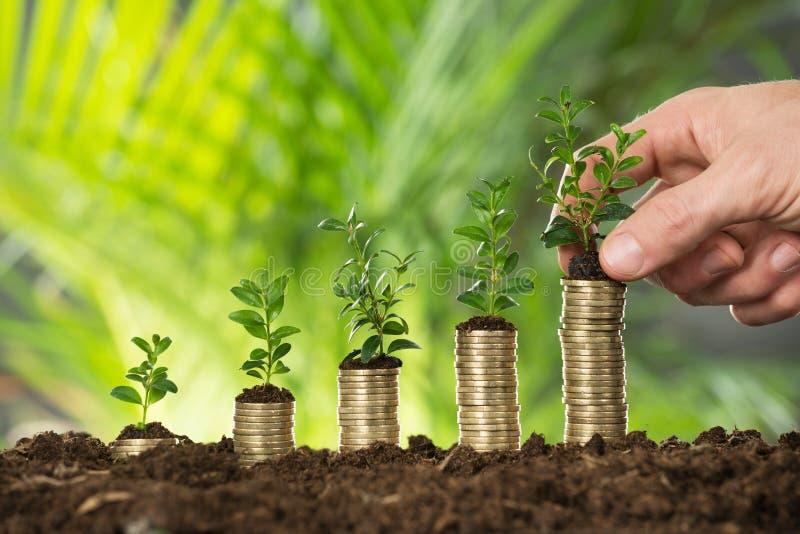 Person Hand Holding Small Plant em moedas empilhadas foto de stock royalty free