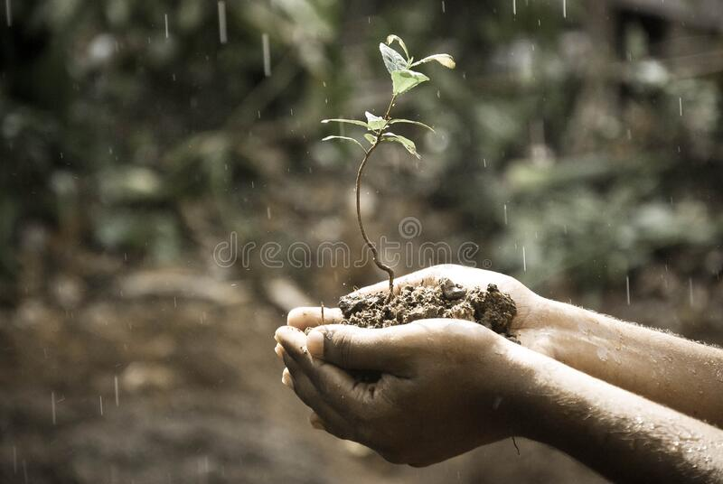 Person Handing Green Plant Free Public Domain Cc0 Image