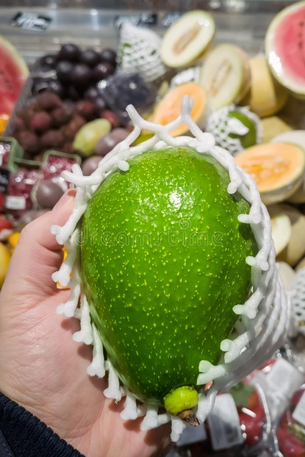 Person holding big fresh ripe royal avocado wrapped in foam cover at grocery store or market.Buyer choosing best food goods at stock image