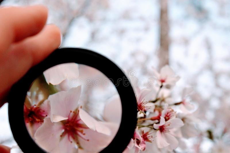 Person Holding Black Magnifying Glass royalty free stock image