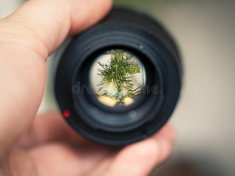 Person Holding Black Smartphone Camera Lens Capturing Green Plant in Selective Focus Photography stock photography