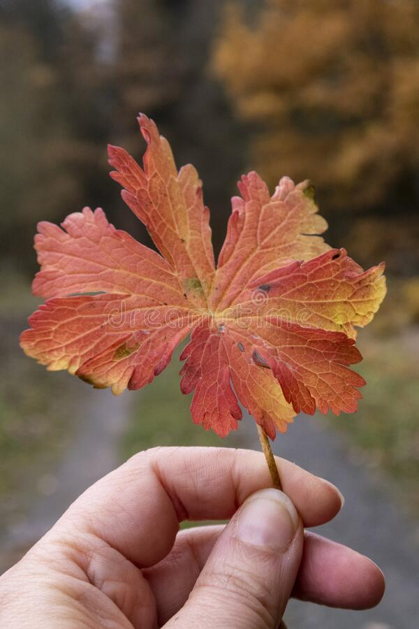 Holding a leaf royalty free stock image