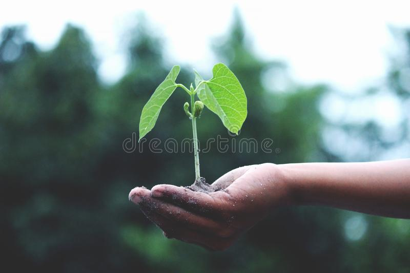 Person Holding A Green Plant royalty free stock image