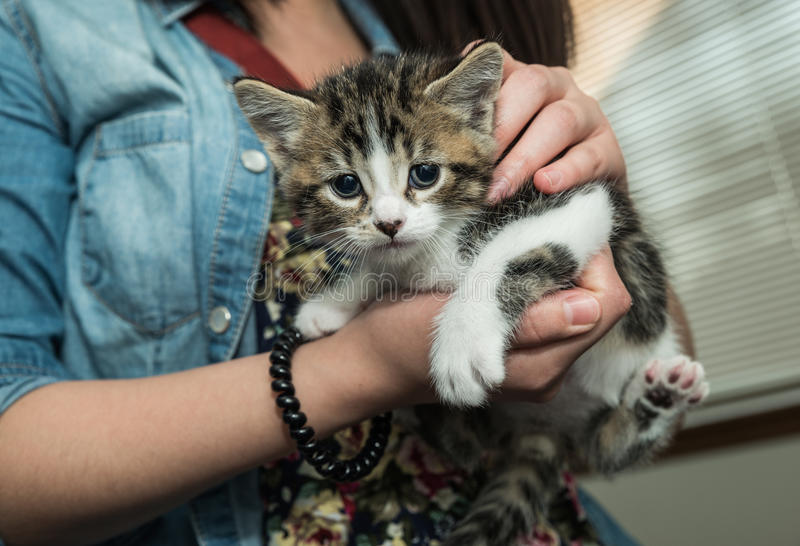 Person holding pet baby cat. Loving person holding pet baby cat in arms royalty free stock photos