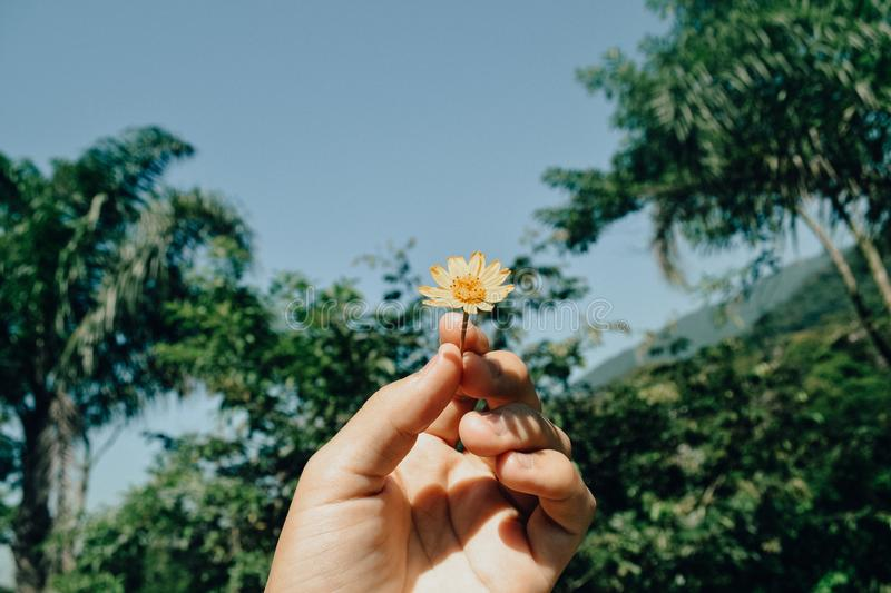 Person Holding White Aster Beside Trees Under White Clouds Blue Skies Daytime stock images