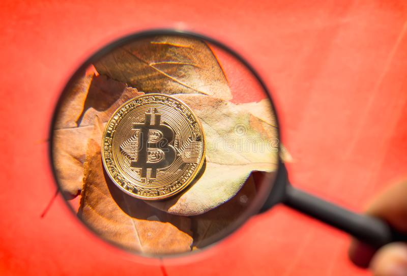 Person looking through a magnifying glass on bitcoin. Unrecognizable person holding magnifying glass and looking through it on new virtual money golden bitcoin stock image