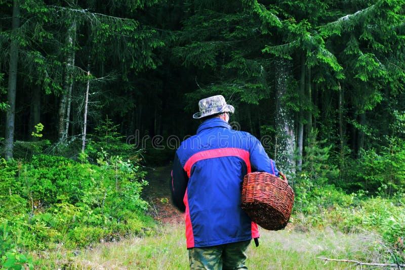 Person med champinjoner för en korg i skogen fotografering för bildbyråer