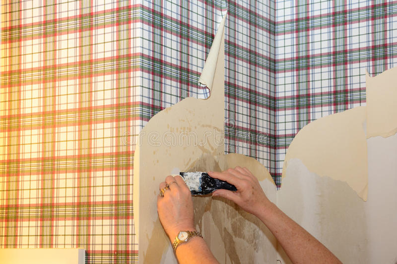 Person Peeling Wallpaper fotografia de stock