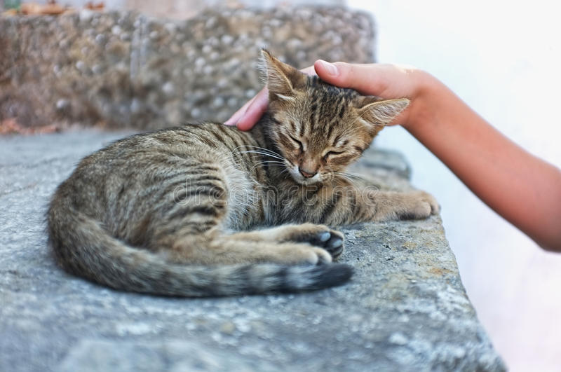 Person is petting a cat. Young person is petting a tabby kitten royalty free stock photography