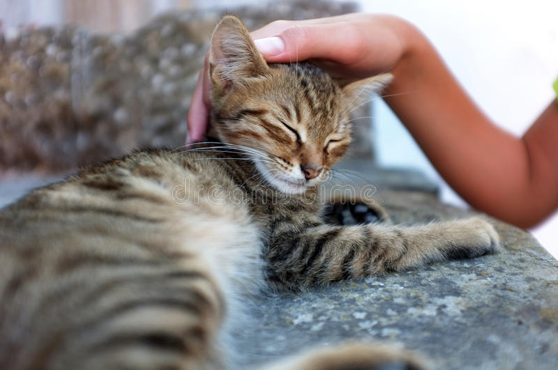 Person is petting a cat. Young person is petting a tabby kitten royalty free stock photos