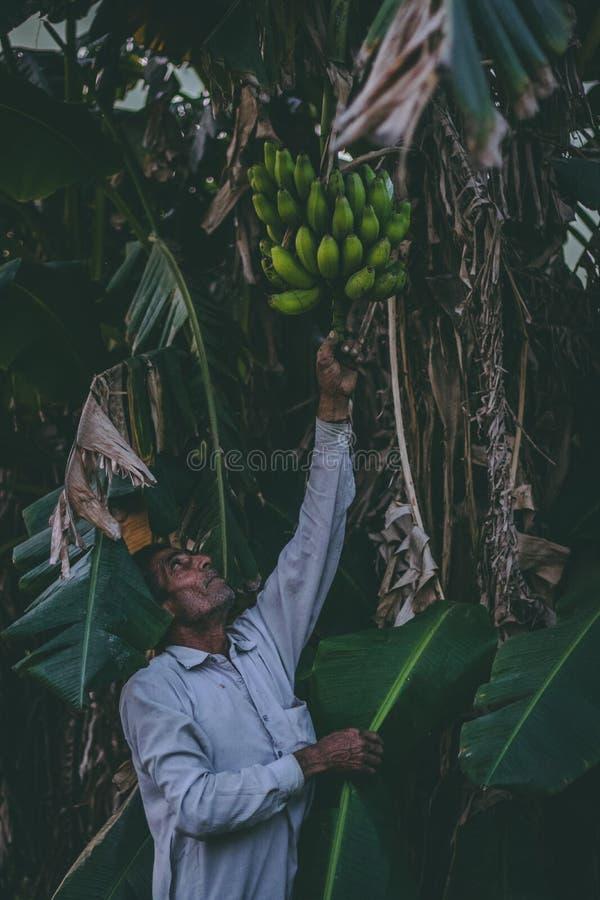Person Reaching for Banana Fruit stock photos