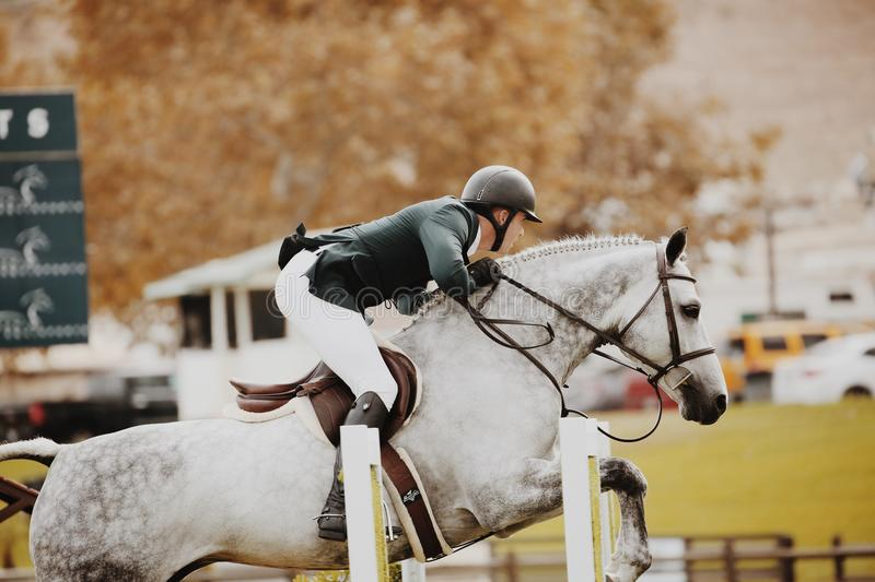 Person Riding Horse royalty free stock image